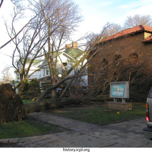 Uprooted tree on East College