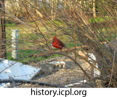 http://history.icpl.org/import/tornado_2006_roch_em_0010.jpg