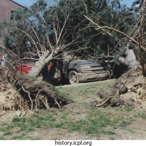 Downed Trees on court Street