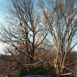 Pink insulation in the trees