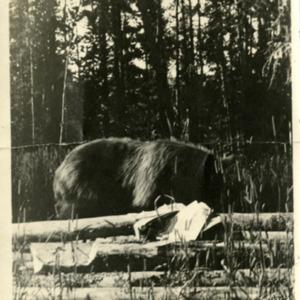 Animal Photo, undated