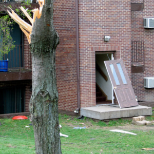 Damaged tree and apartment building on Court Street