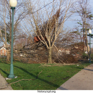 Damage to trees at College Green Park
