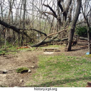 Tree damage on North 7th Avenue