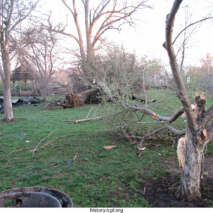 Tree damage at College Green Park