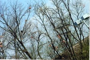 tornado_2006-0017_wh.jpg